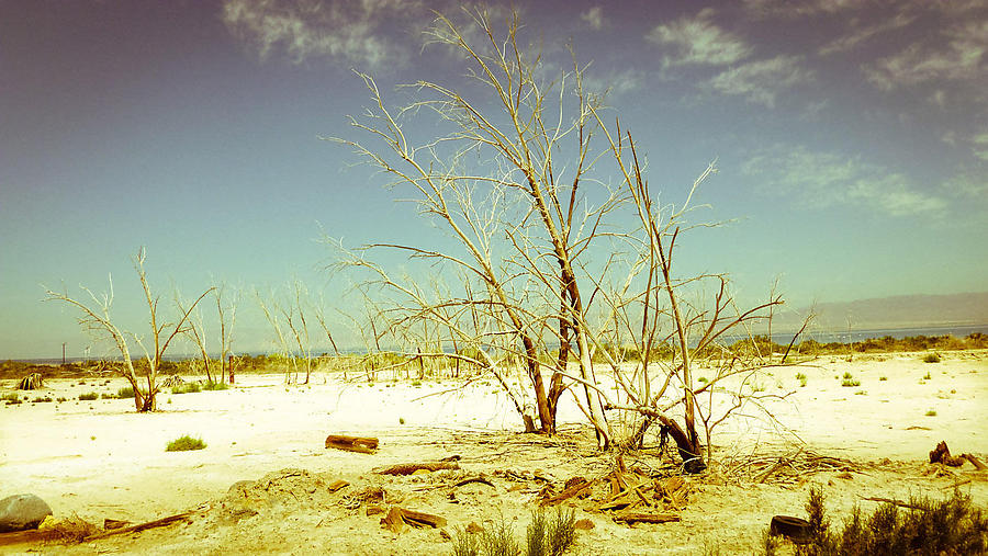Salton-Sea_5_defaultbody
